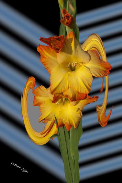 DSC_2486_gladiole_05_6