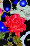 IMGP0466_rose_sust_06